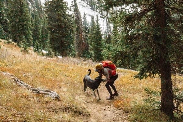 trekking cùng cún cưng