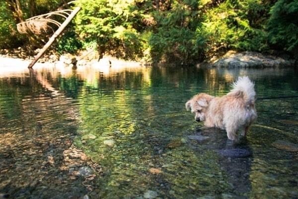 trekking với cún cưng