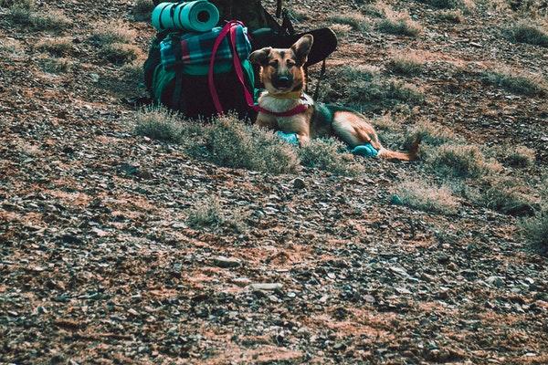 hiking cùng cún cưng