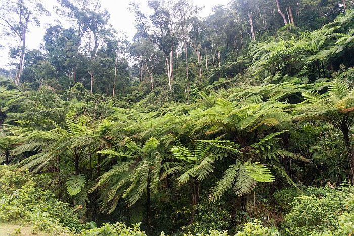 rừng nguyên sinh a roàng