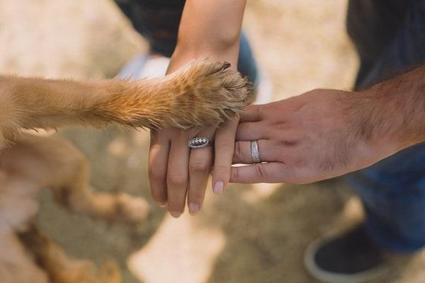 trekking với thú cưng
